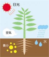 植物の葉と根