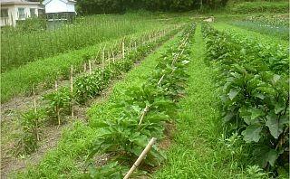 松本自然農園の畑