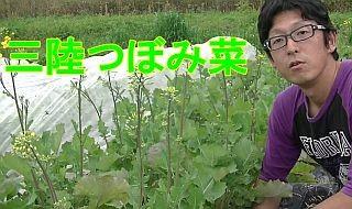 三陸つぼみ菜