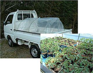 軽トラック育苗
